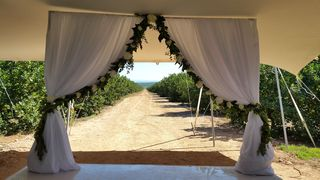 draping backdrop hire and flowers port elizabeth 006